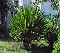 ingrids welt mauritius flora. Black Bedroom Furniture Sets. Home Design Ideas