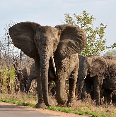 können elefanten weinen